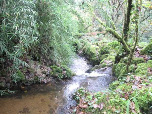 Rosemerryn Woodland