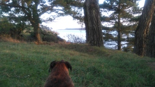 Ginny admires the view