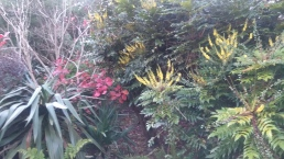 Splashes of winter colour at Bosloe
